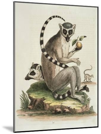 Le Maucuaco, c.1751-George Edwards-Mounted Giclee Print