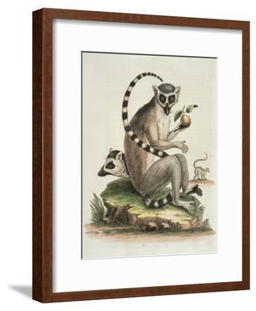 Le Maucuaco, c.1751-George Edwards-Framed Giclee Print