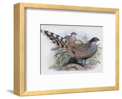 Cheer-John Gould-Framed Premium Giclee Print