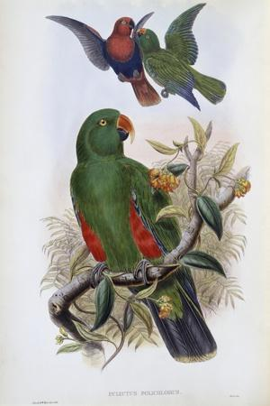 Green Lory-John Gould-Stretched Canvas Print
