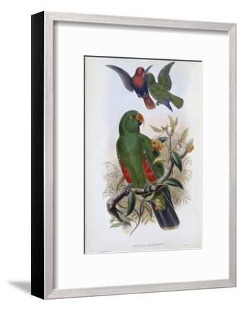 Green Lory-John Gould-Framed Giclee Print