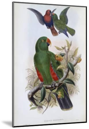 Green Lory-John Gould-Mounted Giclee Print