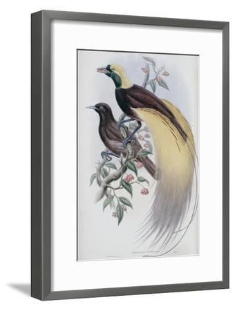 Greater Bird of Paradise-John Gould-Framed Premium Giclee Print