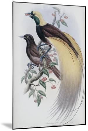 Greater Bird of Paradise-John Gould-Mounted Premium Giclee Print