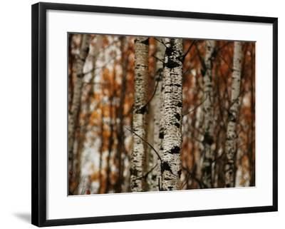 Autumn Colors at Lake of the Woods, Ontario, Canad-Keith Levit-Framed Photographic Print