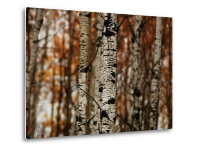 Autumn Colors at Lake of the Woods, Ontario, Canad-Keith Levit-Metal Print