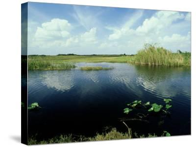 Everglades, Florida-David Tipling-Stretched Canvas Print