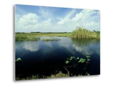 Everglades, Florida-David Tipling-Metal Print