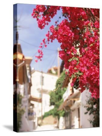 Red Flowers, Epirus, Greece-Walter Bibikow-Stretched Canvas Print
