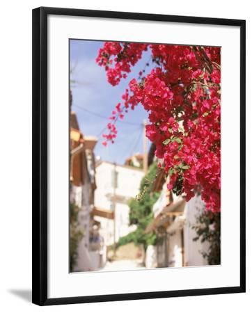 Red Flowers, Epirus, Greece-Walter Bibikow-Framed Photographic Print