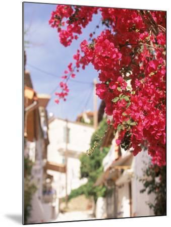 Red Flowers, Epirus, Greece-Walter Bibikow-Mounted Photographic Print