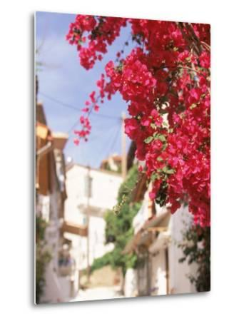 Red Flowers, Epirus, Greece-Walter Bibikow-Metal Print