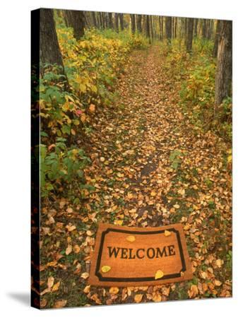 Welcome Mat on Forest Trail-Kevin Law-Stretched Canvas Print
