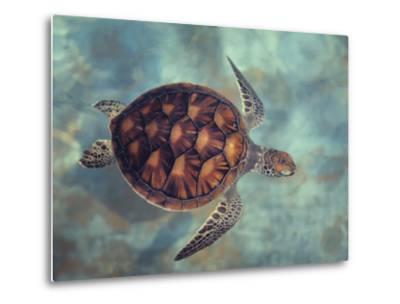 Green Turtle, Java, Indian Ocean-Gerard Soury-Metal Print