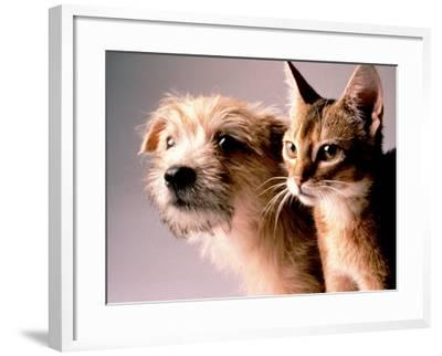 Cat and Dog-Daniel Fort-Framed Photographic Print