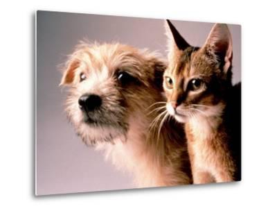 Cat and Dog-Daniel Fort-Metal Print