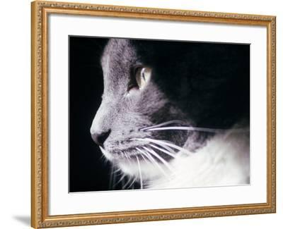 Portrait of a Cat-Debra Cohn-Orbach-Framed Photographic Print