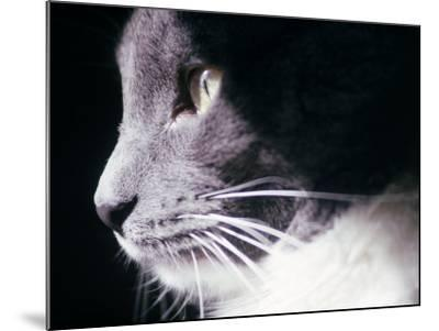 Portrait of a Cat-Debra Cohn-Orbach-Mounted Photographic Print