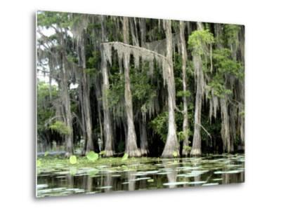 Moss Covered Bald Cypress Trees, Caddo Lake, TX-Ray Hendley-Metal Print