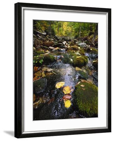 Stream in the Woods-Dan Gair-Framed Photographic Print