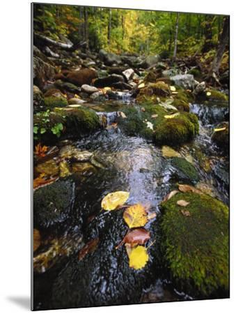 Stream in the Woods-Dan Gair-Mounted Photographic Print