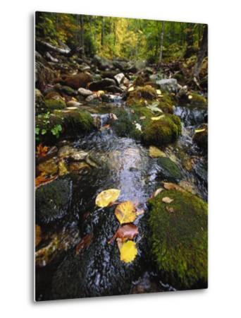 Stream in the Woods-Dan Gair-Metal Print