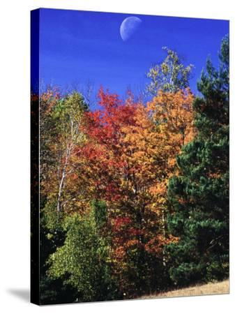 Autumn Trees with Moon, Vermont-Russell Burden-Stretched Canvas Print