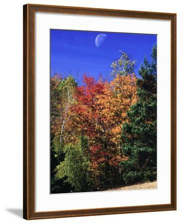 Autumn Trees with Moon, Vermont-Russell Burden-Framed Photographic Print