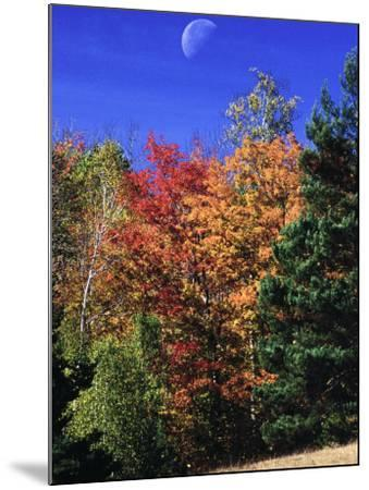 Autumn Trees with Moon, Vermont-Russell Burden-Mounted Photographic Print