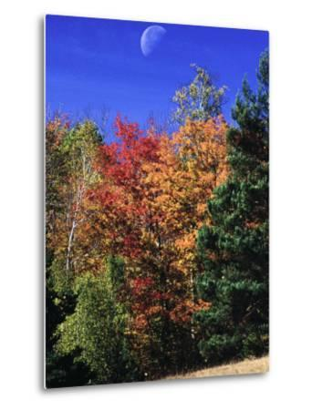 Autumn Trees with Moon, Vermont-Russell Burden-Metal Print