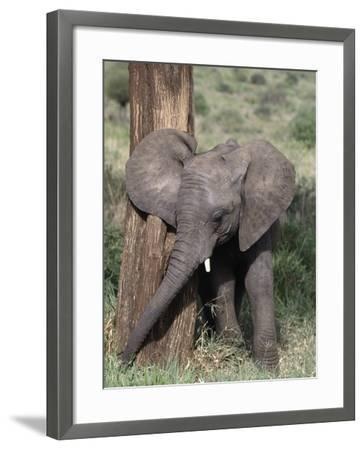 African Elephant Baby, Loxodonta Africana-D^ Robert Franz-Framed Photographic Print