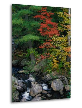 Fall Scenic, Acadia National Park, Maine-Elizabeth DeLaney-Metal Print