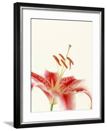 Robrum Lily-Dave Porter-Framed Photographic Print