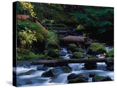 Royal Creek, OR-Frank Staub-Stretched Canvas Print