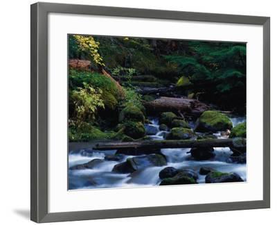 Royal Creek, OR-Frank Staub-Framed Photographic Print