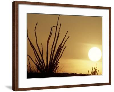 Desert Sunset with Ocotillo, CA-D^ Robert Franz-Framed Photographic Print