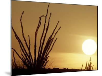 Desert Sunset with Ocotillo, CA-D^ Robert Franz-Mounted Photographic Print