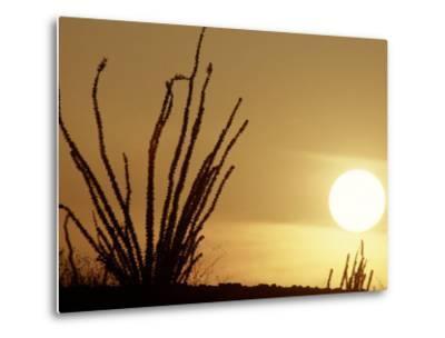 Desert Sunset with Ocotillo, CA-D^ Robert Franz-Metal Print