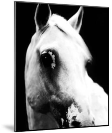 White Horse-Tim Lynch-Mounted Photographic Print