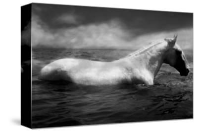 White Horse Swimming-Tim Lynch-Stretched Canvas Print