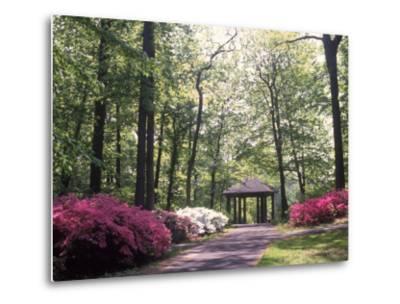 Azalea Way, Botanical Gardens, Bronx, NY-Lauree Feldman-Metal Print