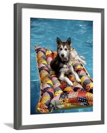 Dog Floating on Raft in Swimming Pool-Chris Minerva-Framed Photographic Print