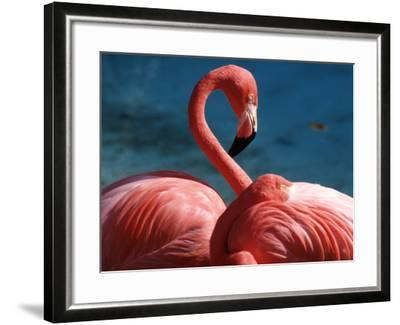 Pink Flamingos-Michele Burgess-Framed Photographic Print