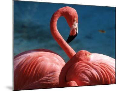Pink Flamingos-Michele Burgess-Mounted Photographic Print