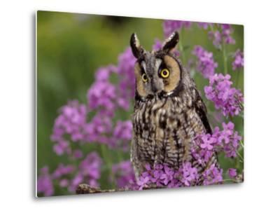 Long Eared Owl-Russell Burden-Metal Print