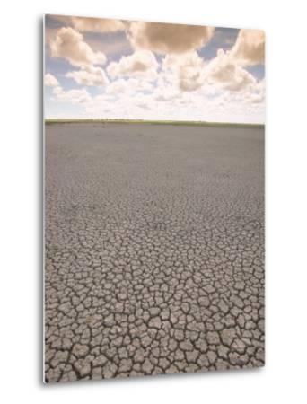 Parched Earth, Etosha National Park, Namibia-Walter Bibikow-Metal Print