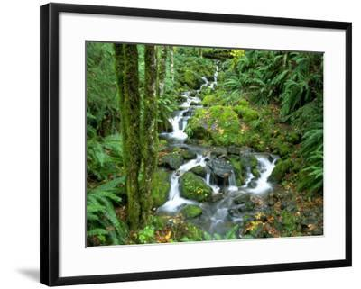 Waterfall at Mt. Rainer Rain Forest-Charles Benes-Framed Photographic Print