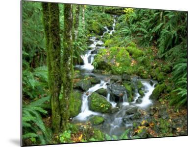 Waterfall at Mt. Rainer Rain Forest-Charles Benes-Mounted Photographic Print