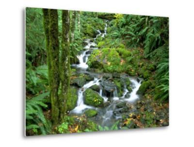 Waterfall at Mt. Rainer Rain Forest-Charles Benes-Metal Print