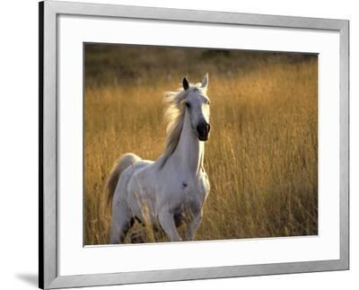 Horse Galloping, Half Moon Bay, California-Jerry Koontz-Framed Photographic Print